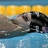 Michael Phelps: Swimmer in hot water after Louis Vuitton ad is leaked before end of Olympics