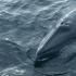 South Korea unveils 'scientific' whaling proposal